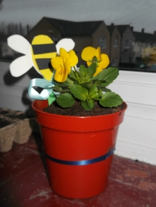 Potted pansy with a bee decoration